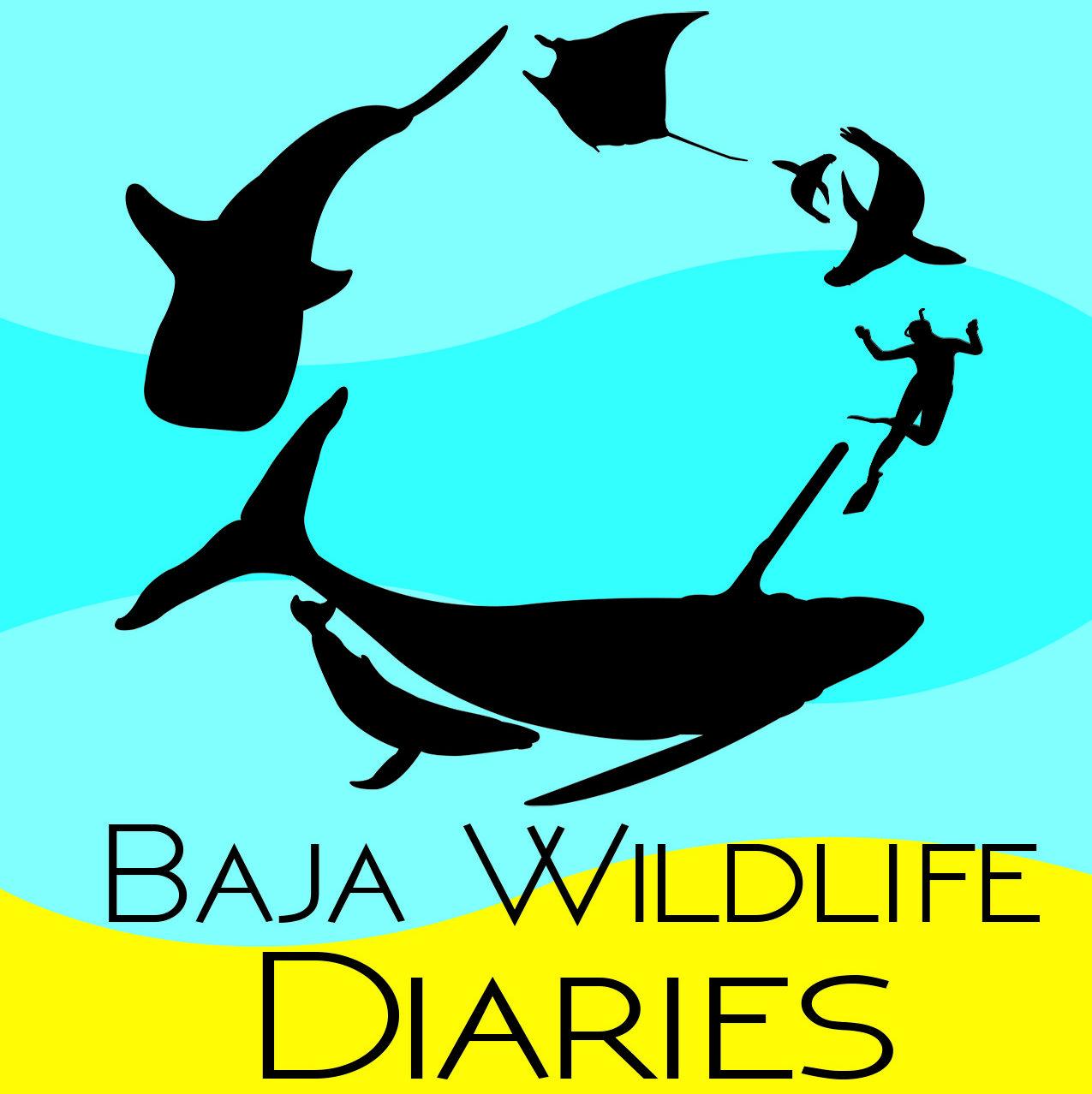 Baja Wildlife Diaries